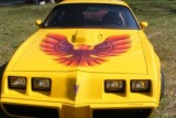 1979 - 1981 Trans Am Decal FULL Kit 5 Color Bird With FREE Shaker Decal Upgrades!